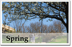 Spring Photo Gallery